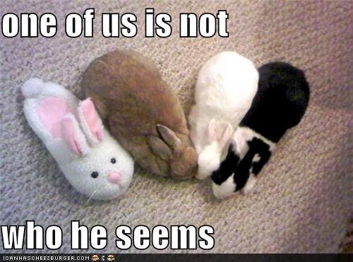 Impostor Syndrome - Bunnies with Fake Rabbit Slipper